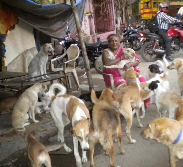 Ada ratusan anjing yang ditolong oleh nenek Debi | Photo: Copyright oddyticentral.com