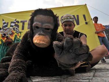 111207bfoto-orangutan-b.jpg
