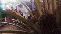 Masyarakat Siak Riau akan mendapatkan 10 ribu hektare tanah gratis (Liputan6.com / M.Syukur)