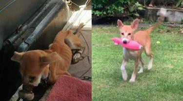 Kisah Anjing yang Melarikan Diri dari Peternakan Ilegal di Bali, Bikin Haru
