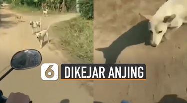 Video kocak pengendara motor dikejar anjing viral di media sosial.