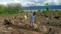 Mama Sopia Peni bersama sang suami sedang menanam di kebunmereka berdekatan dengan gunung api ili lewotolok di Desa Lamawolo, Kecamatan Ile Ape Timur, Kabupaten Lembata. (Liputan6.com/Dionisius Wlibardus)