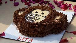 Sebuah kue ulang tahun untuk merayakan ulang tahun simpanse bernama Rita yang berusia 58 tahun di kebun binatang di New Delhi (14/12). Rita juga memperoleh bingkisan hadiah berupa selimut baru, bola sepak, dan mainan baru lainnya. (AFP Photo/Money Sharma)