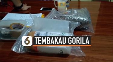 gorila thumbnail