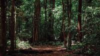 Ilustrasi hutan Indonesia (Dok.Unsplash/ Imat Bagja Gumilar)