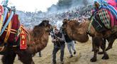 Seorang pria mencoba menarik unta untuk bergulat dalam Selcuk Camel Wrestling Festival di Kota Selcuk, Turki, Minggu (20/1). Gulat yang melibatkan kedua unta jantan ini merupakan tradisi suku-suku Turki nomaden sejak 2.400 tahun lalu. (BULENT KILIC/AFP)