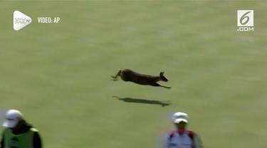Seekor rusa meramaikan turnamen golf di Korea Selatan. Hewan tersebut berlari di tengah lapangan hingga melompati penonton.