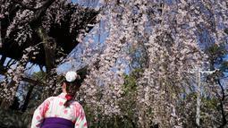Seorang wanita mengenakan pakaian tradisional yang disebut 'hakama' melihat bunga sakura bermekaran di taman Tokyo, Jepang, Jumat (23/3). Waktu mekar sakura bisa dikatakan sangat pendek. (Foto AP/Eugene Hoshiko)