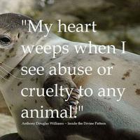 Malang sekali nasib perempuan ini. Niat menghentikan aksi penyiksaan anjing laut, malah dapat bogem mentah dari si penyiksa. (Via: pinterest.com)