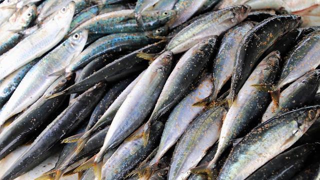 Lebih Kaya Gizi Ketimbang Salmon Ikan Kembung