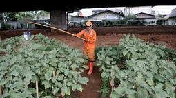 Harun (50) saat merawat kebun sayur di pinggir Jalan Tol Becakayu, Jakarta, Kamis (18/6/2020). Selepas aktivitas, Harun rutin melakukan perawatan kebun yang hasil panennya biasa dikonsumsi sendiri atau dibeli warga setempat dengan harga seikhlasnya. (merdeka.com/Iqbal S. Nugroho)
