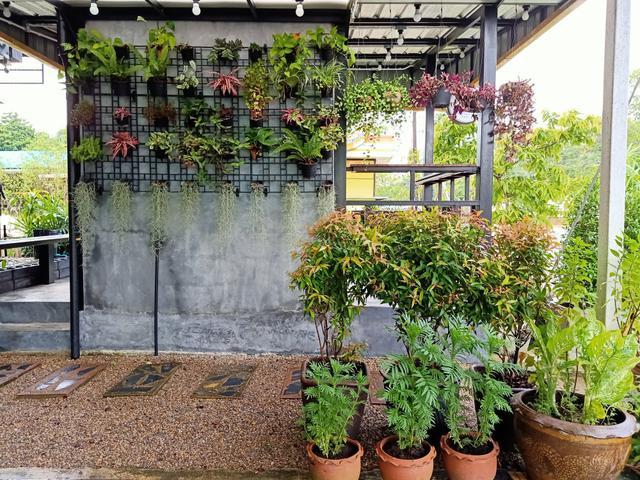 Cara Menata Bunga DI Depan Rumah