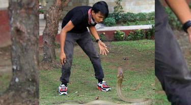 Ular king cobra
