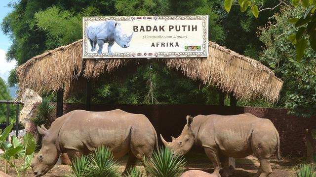 Image result for batu secret zoo