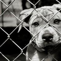 Hewan, seperti manusia, juga memiliki perasaan. Mereka pun bisa merasa bahagia jika dirawat dengan penuh cinta kasih.