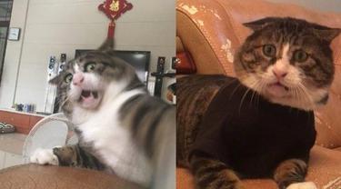 Tingkah Kocak Kucing Ini Viral Jadi Meme di Medsos