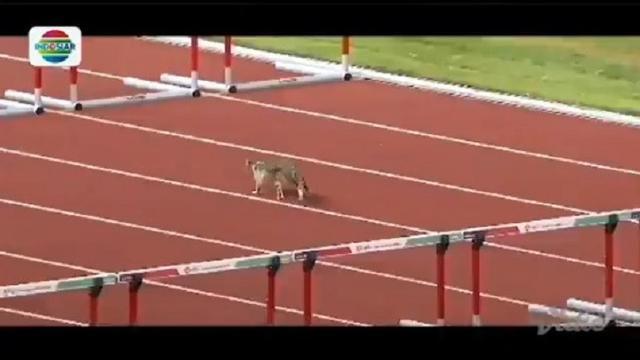 kucing ikut asian games (foto: vidio.com)