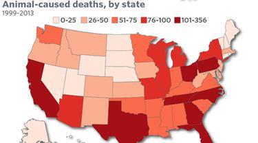Membunuh 58 Jiwa Setiap Tahun, Ini Hewan Paling 'Ganas' di AS