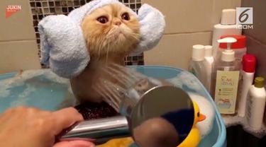 Bak seorang bocah, kucing ini dimandikan di bak berisi mainan karet dengan ekspresi yang menggemaskan.
