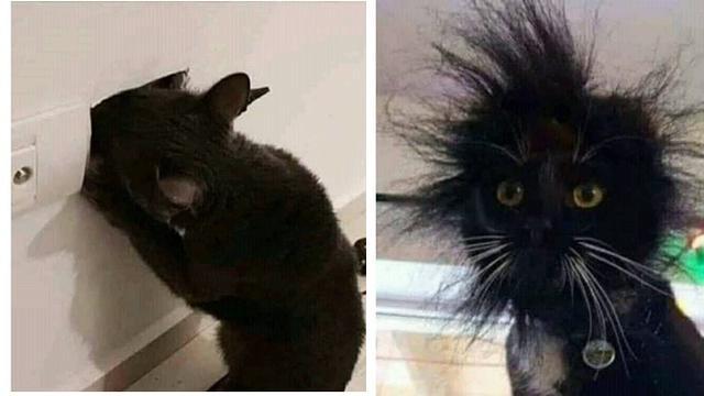 Download 61+  Gambar Kucing Lucu Dan Suaranya Paling Baru HD
