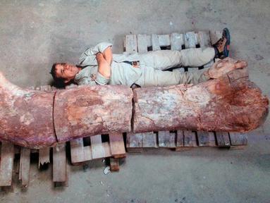 Para palaentolog menemukan tulang fosil dinosaurus terbesar di bumi, Argentina, Sabtu (17/5/2014) (AFP PHOTO / Museo Egidio Feruglio).