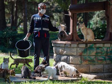 Seorang staf Kota Kadikoy merawat kawanan kucing liar di Istanbul, Turki, pada 18 April 2020. Bahar Cetinkaya dan timnya yang beranggotakan tiga orang menyusuri jalan di Istanbul dengan mobil membawa makanan kering untuk hewan seiring lockdown di kota tersebut akibat COVID-19. (Xinhua/Yasin Akgul)