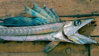 Cumi Raksasa hingga Ikan Penis, 11 Makhluk Laut Aneh yang Pernah Terdampar