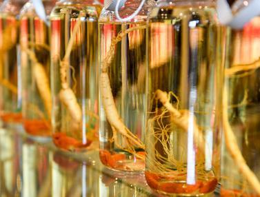 Budidaya Ginseng Masih Hidup di Jilin China