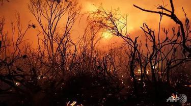 Ilustrasi kebakaran hutan dan lahan di Australia selama musim kemarau, lazim dikenal sebagai fenomena Bushfire.