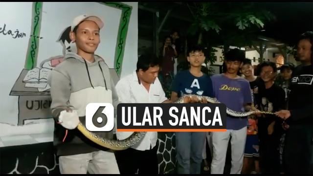 ular Sanca Thumbnail