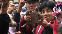 Seorang wanita mengangkat kura-kura peliharaannya untuk diberkati di Lima, Peru pada Minggu (6/10/2019). Pemberkatan hewan ini untuk menghormati Santo Fransiskus yang dikenal sebagai santo pelindung bagi binatang dan lingkungan hidup. (AP/Martin Mejia)