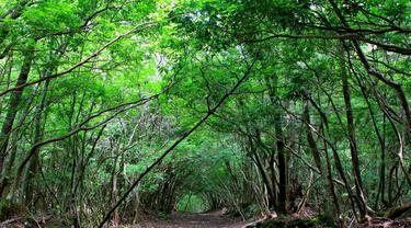 Keindahan Hutan Aokigahara Dan Legenda Hantu Mitologi Jepang