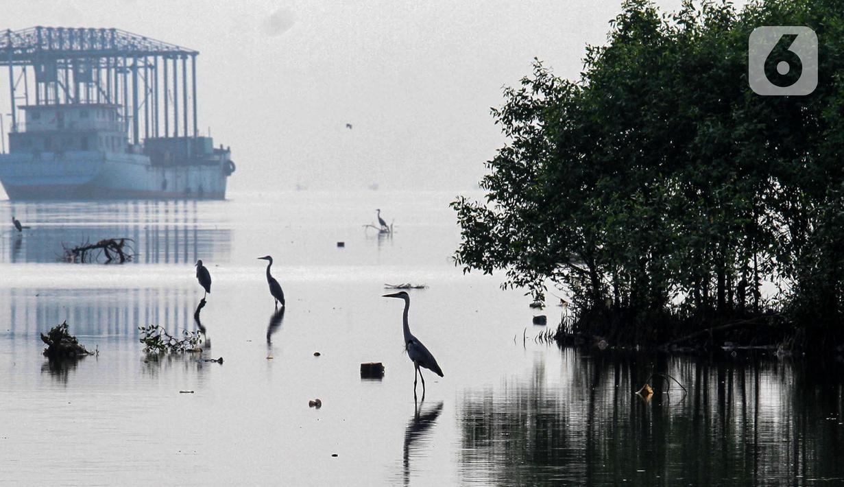 Sejumlah burung ketika bermigrasi di Muara Hutan Lindung Angke Kapuk Jakarta, Sabtu (08/05/2021). Data Birdlife Indonesia, lebih dari 50 juta burung air dari lebih 250 populasi menggunakan jalur terbang yang membentang dari Asia Timur, Asia Tenggara sampai Selandia Baru. (Liputan6.com/Fery Pradolo)
