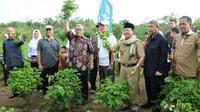 Budidaya Indigofera mampu memberikan penghasilan bagi petani berkisar Rp. 2,8 - 3,6 Juta/ha/bulan.