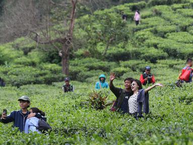 Tempat wisata kebun teh puncak bogor kembali ramai