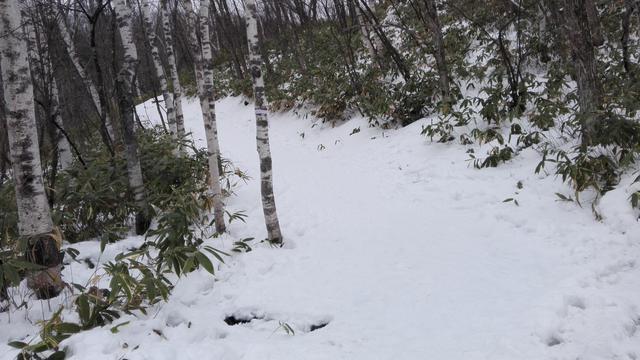 Jelajah Hutan Bersalju Liburan Musim Dingin, di Jepang