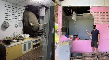 Kelaparan, Gajah Ini Jebol Dinding Dapur Rumah Warga Demi Curi Makanan