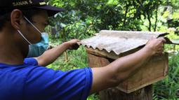 Anggota Kelompok Tani Hutan Hijau Lestari membudidayakan lebah madu jenis Trigona di kawasan Hutan Kota Srengseng, Kembangan, Jakarta Barat, Sabtu (5/6/2021). Selain bisa melihat lebahnya, warga juga bisa menyedot madu langsung dari sarangnya. (Liputan6.com/Johan Tallo)