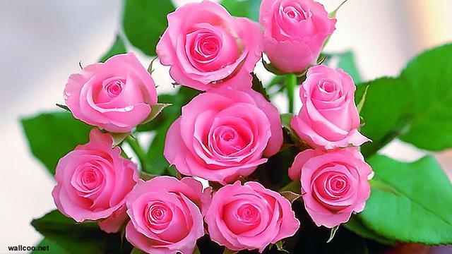 Makna Di Balik Indahnya Bunga Mawar Showbiz Liputan6 Com
