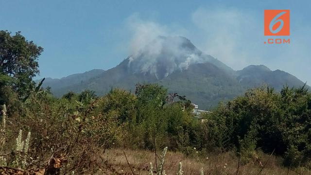 Hutan di Gunung Panderman Terbakar Bisa Bikin Kera Turun Gunung