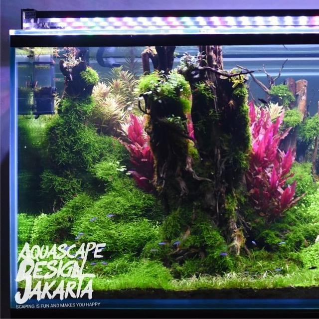 Cerita Akhir Pekan Aquascape Serunya Hias Dan Mempercantik Akuarium Lifestyle Liputan6 Com