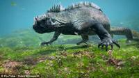 Iguana mirip Godzilla. (Steve Winkworth)
