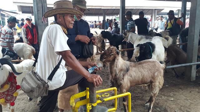 Image result for salon kambing