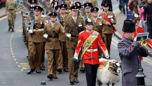 Kolonel dari Resimen Angkatan Darat Inggris, Brigadir Andrew, menganugerahi bintang kehormatan bagi domba yang kini berpangkat Kopral Derby.