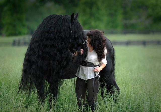 Frederik adalah kuda paling tampan/Copyright odditycentral.com/Frederick the Great/Facebook