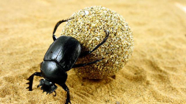 Ilustrasi kumbang scarab (iStock)