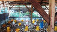 """Ayam di peternakan """"Rudy Jaya Farm"""" menggunakan pakan pengganti antibiotik yang membuat ayam tidak nafsu makan. (Liputan6.com/Fitri Haryanti Harsono)"""