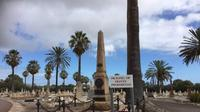 TPU West Terrace Cemetery di Adelaide, Australia Selatan yang terdapat banyak pohon Zaitun. (ABC News/Caroline Winter)