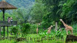 Orang-orang mengunjungi Kebun Binatang Negara dekat Kuala Lumpur, Malaysia, 19 Desember 2020. Kebun Binatang Negara kembali dibuka untuk umum setelah dua bulan ditutup berdasarkan perintah kontrol pergerakan bersyarat di area tersebut. (Xinhua/Chong Voon Chung)