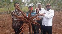 Panen ubi kayu oleh jajaran Dinas Pertanian dan Pangan Kabupaten Gunungkidul yang dipimpin langsung Bambang Wisnu Broto. (Dok Kementan)